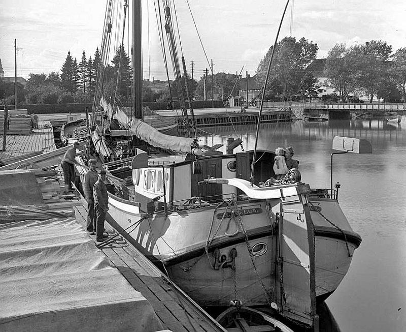 zeemeeuw 1904 in haven köping.jpg